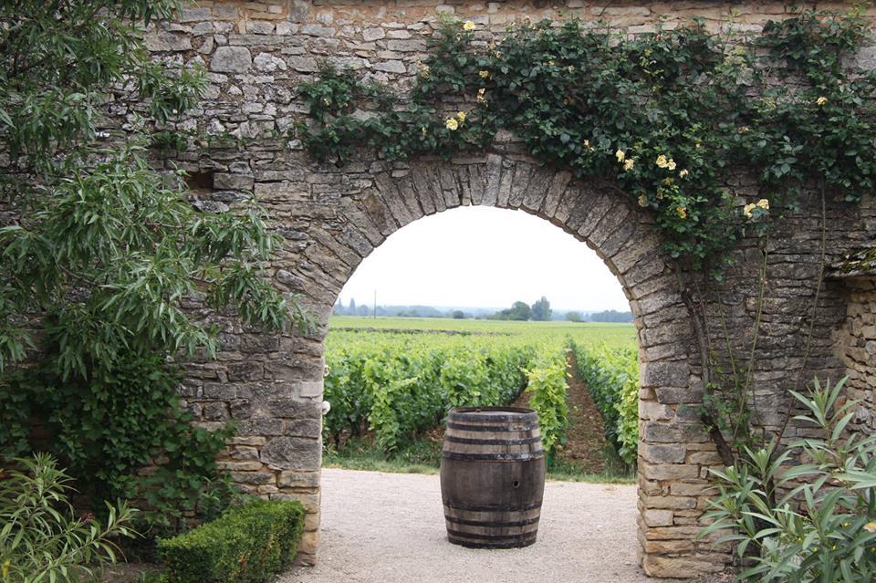 Uitzicht op een wijnperceel