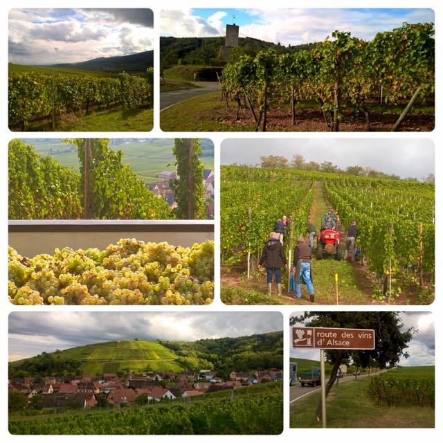 Wijnreis naar de Elzas